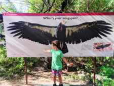 Taylor family with Condor Wingspan at Phoenix Zoo Tempe 1