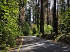 Winding Road in Yosemite National Park 2