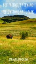 Everyone wants to experience Yellowstone National Park wildlife, from bison to bears. The best places to view moose, bison, pelicans and more can be easily visited on any Yellowstone NP trip. 2travelads.com