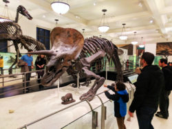 Taylor Family at American Museum of Natural History NYC
