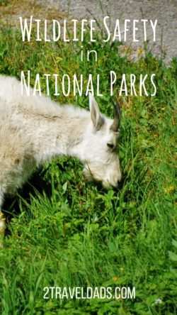 National Parks wildlife safety is important for both the enjoyment of those visiting the Parks and for the future of the animals found in nature. From hiking to boating, there are ways to keep humans and animals safe for their mutual benefit. 2traveldads.com