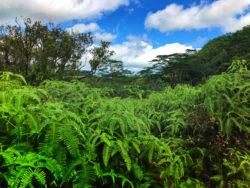 Jungle Na Palii in forest Kauai Hawaii 1