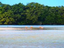 Flamingos at Yum Balam Preserve Isla Holbox Yucatan 3