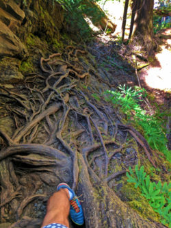 Taylor Family hiking root ladder to Murhut Falls Olympic National Forest 4