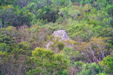 View from the top of Nohoch Mul the great pyramid at Coba Mayan Ruins Yucatan 3