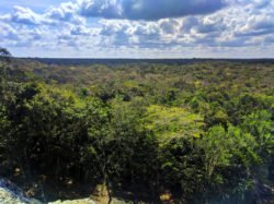 View of jungle from the Great pyramid at the Coba Mayan Ruins Yucatan 2