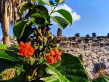Flowers at El Rey Mayan Ruins Archaeological Site Cancun Yucatan 1