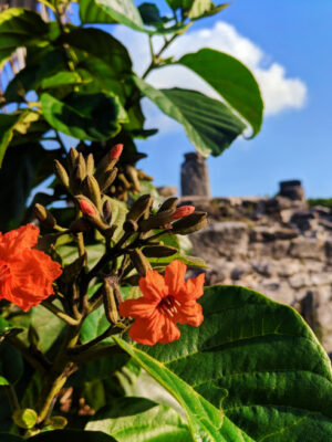 Flowers at El Rey Mayan Ruins Archaeological Site Cancun Yucatan 1