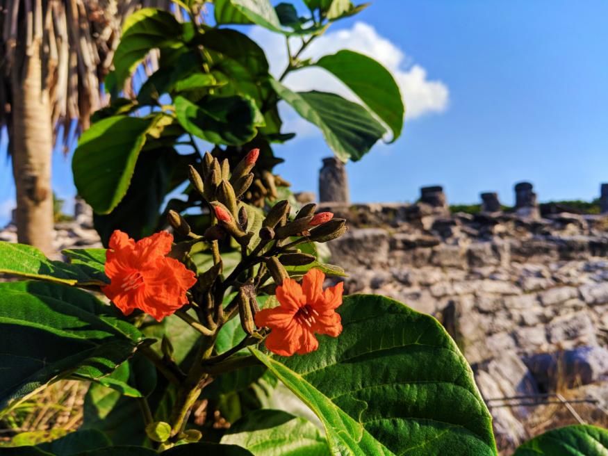 Flowers-at-El-Rey-Mayan-Ruins-Archeological-Site-Cancun-Yucatan-1.jpg