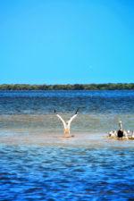 Pelican colony at Yum Balam Preserve Isla Holbox Yucatan 4