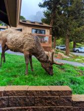 Bull Elk at McGregor Mountain Lodge Estes Park Colorado 1