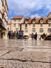 Cat in town square in Old Town Split Croatia 1