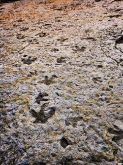 Fossilized dinosaur tracks at Dinosaur Ridge Morrison Denver Colorado 1