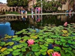 Taylor Family at Lily Pond Balboa Park San Diego California 2
