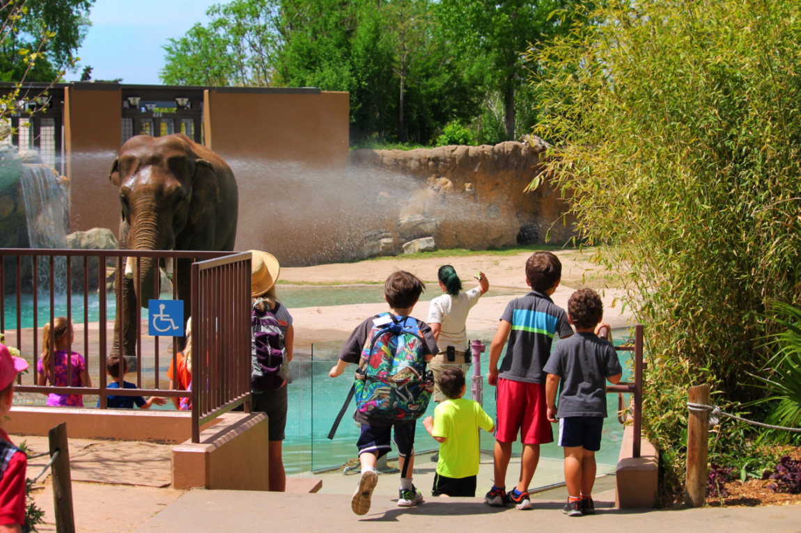 Taylor Family with Elephants at Denver Zoo Colorado 5