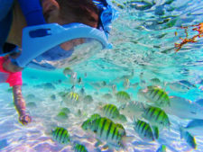 Snorkeling with colorful fish Isla Mujeres Quintana Roo Mexico from FIAB 1