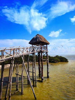 Bird Refuge at Yum Balam Preserve Isla Holbox Yucatan 2