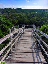 Mangrove-Forest-Yum-Balam-Preserve-Isla-Holbox-Yucatan-5-169x225.jpg