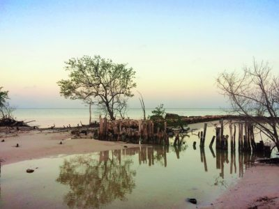 Reflections in stream at beach on Isla Holbox Quintana Roo Mexico 1