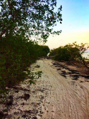 Running path on beach on Isla Holbox Quintana Roo Mexico 1
