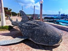 Whale Shark at Isla Holbox Colorful sign Quintana Roo Mexico 1