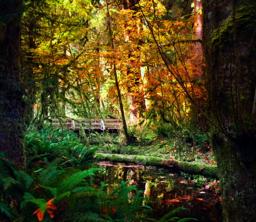 Fall Colors in Hoh Rainforest Olympic National Park 12