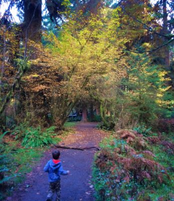 LittleMan and Fall Leaves in Hoh Rainforest Olympic National Park 1b