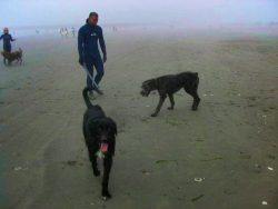 Rich Ski Like a Dad surfing with dogs at Westport Washington Coast 1