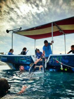 Dive Ninjas mobula free diving Cabo San Lucas Mexico 1