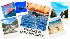 Ecotours-in-Cabo-San-Lucas-twitter-225x127.jpg