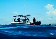 Free Diving with Pelagic Safari Cabo San Lucas Adventures in Baja 2