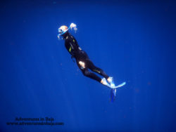 Rob Taylor Free Diving with Pelagic Safari Cabo San Lucas Adventures in Baja 4