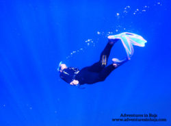 Rob Taylor Free Diving with Pelagic Safari Cabo San Lucas Adventures in Baja 5