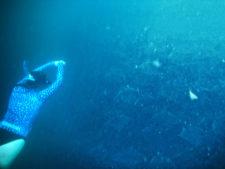 Sarah Girls the Scuba swimming over Mobula Rays Cabo San Lucas Mexico 1