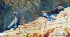 Sea Lions in Cabo San Lucas Baja California Sur Mexico Adventures in Baja 1