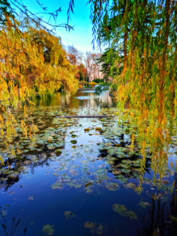 Fall Colors on pond at Beacon Hill Park Victoria BC 1