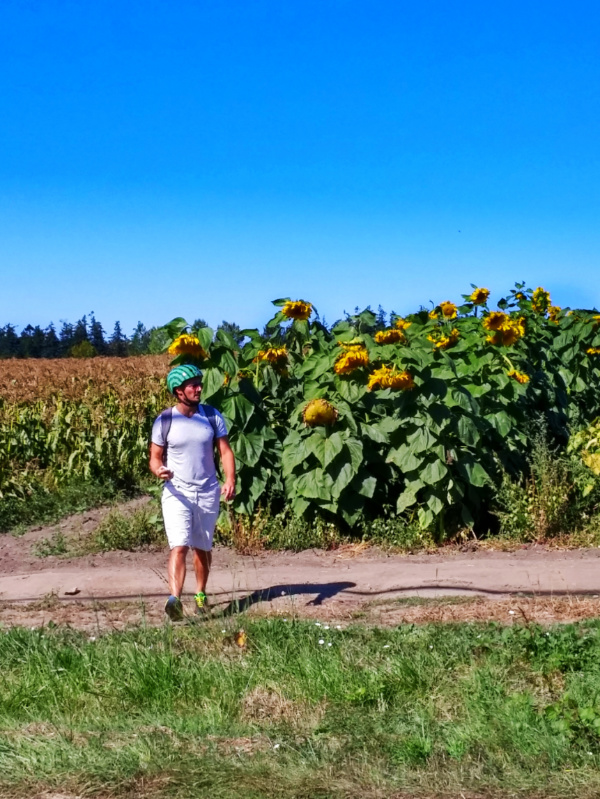 Rob Taylor biking by giant sunflowers Saanich Victoria BC 1
