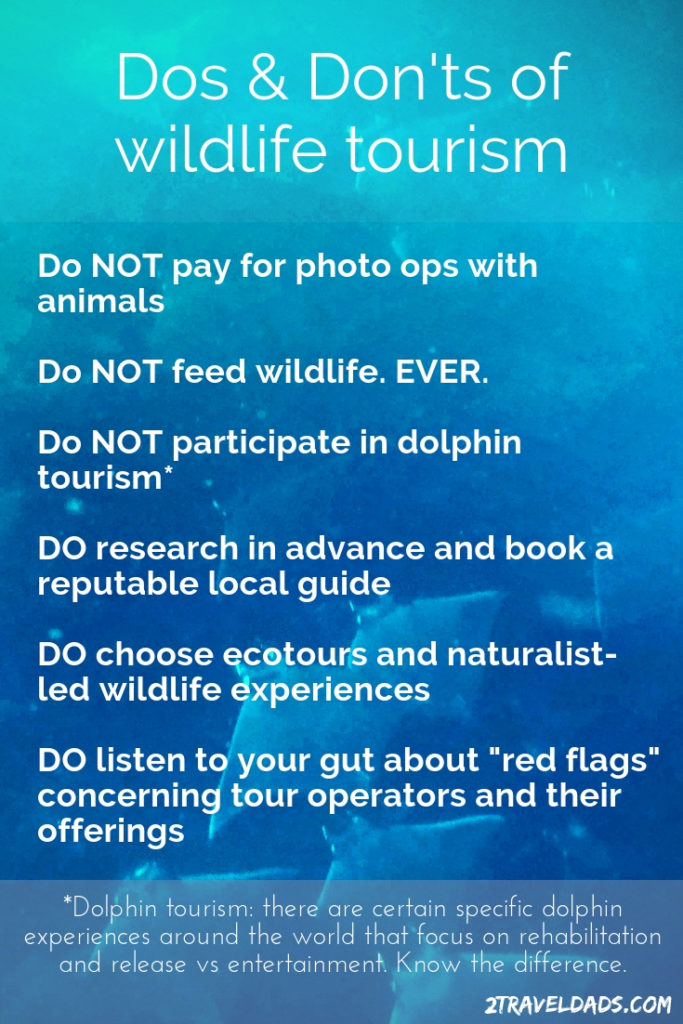 Wildlife tourism is amazing but choosing a responsible tour operator is important. These are the Dos and Don'ts of wildlife tourism.