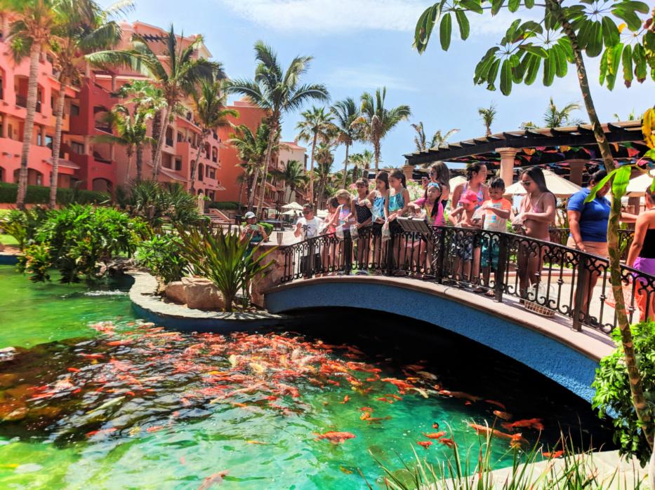 Feeding koi with Kids Club at Playa Grande Resort Cabo San Lucas 1