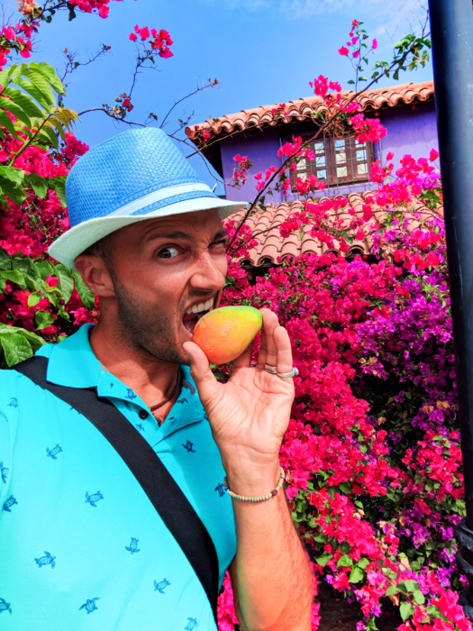 Rob Taylor with Ripe Mango and colorful bushes in Todos Santos Baja California Sur 2