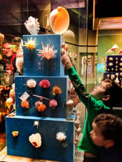 Taylor Family in World of Shells at Fernbank Museum of Natural History Atlanta 1