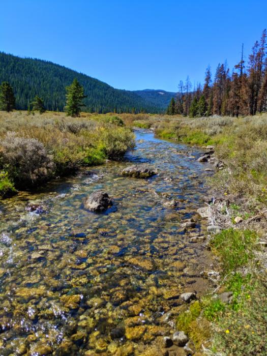 Bacon Rind Creek Yellowstone National Park 1