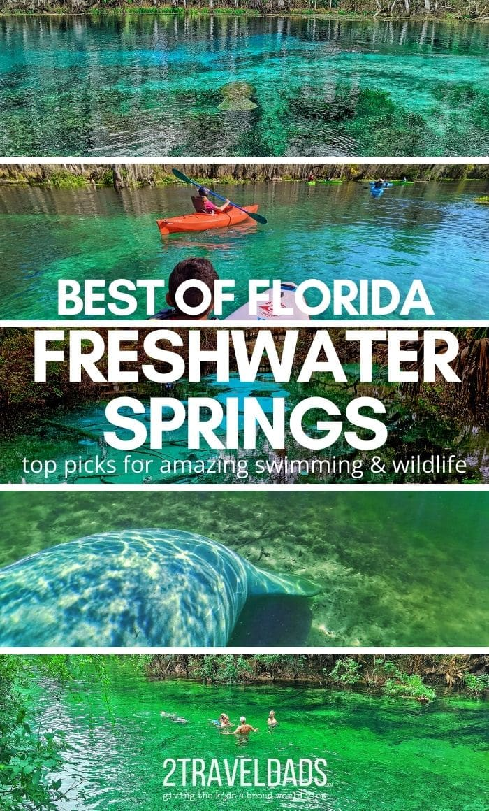 Florida's freshwater springs are relatively unknown and easy to visit. Our top picks for beautiful swimming spots and the best wildlife viewing in Florida.