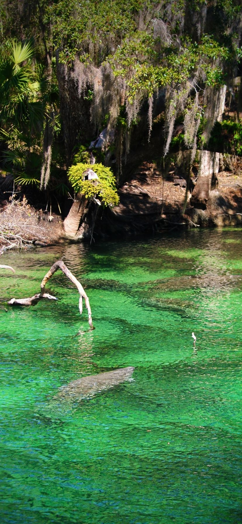 Best Florida Springs for Manatees Blue Spring State Park