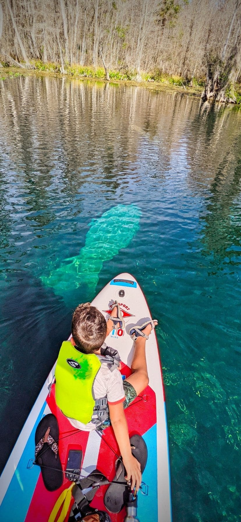 Best Florida Springs for Manatees SUP at Silver Springs State Park