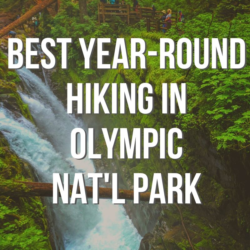 Best Year-round Hiking in Olympic National Park you CAN'T MISS