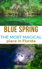 Everything you need to know about visiting Blue Spring State Park near Orlando, Florida. Swimming at the spring's headwaters, manatees by the hundreds and when to visit the most beautiful spot in Florida.