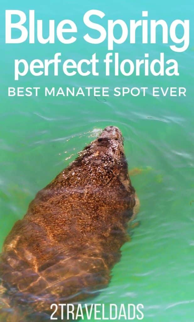 Blue Spring State Park in Orange City, Florida has the the largest populations of manatees in the winter months. Year round it's beautiful and great for tropical swimming, but November - March it's manatee season!