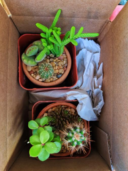 Cactus souvenirs from Moorten Botanical Garden Palm Springs California 1