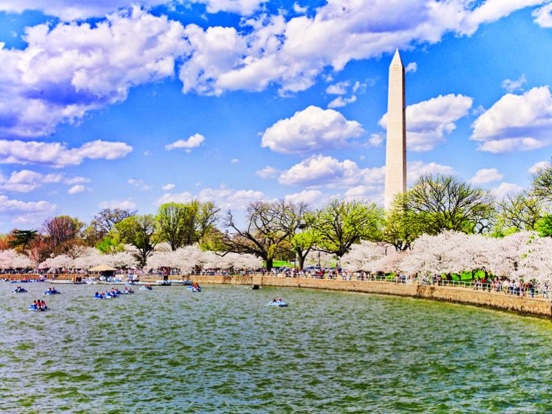 Cherry Blossoms and Washington Monument Washington DC NPS - Carol Highsmith